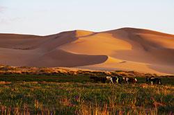 ホンゴル砂丘・バヤンザグ・ヨリーンアム渓谷を巡る南ゴビ周遊ツアー4日〜5日