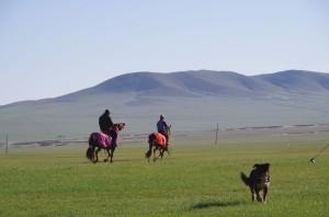 ハンガイスタッフによる馬の調教